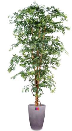 arbre forestier artificiel aralia new plante d 39 int rieur cm vert. Black Bedroom Furniture Sets. Home Design Ideas