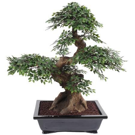 Plante artificielle bonsai chinese en coupe 60cm for Plante 60 cm