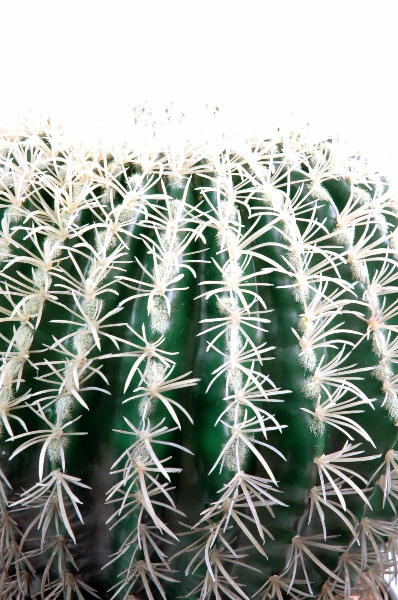 cactus artificiel coussin de belle m re plante d 39 int rieur h 54 cm vert blanc. Black Bedroom Furniture Sets. Home Design Ideas