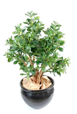Plante artificielle Cactus Crassula large - plante synthétique - H.65 cm vert