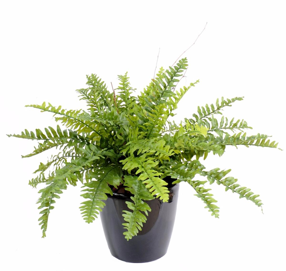 plante artificielle foug 232 re boston en pot int 233 rieur h 50cm vert