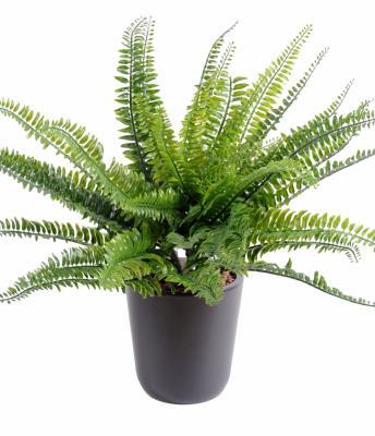 Artificielflower expert en plante artificielle ext rieur for Acheter plante exterieur