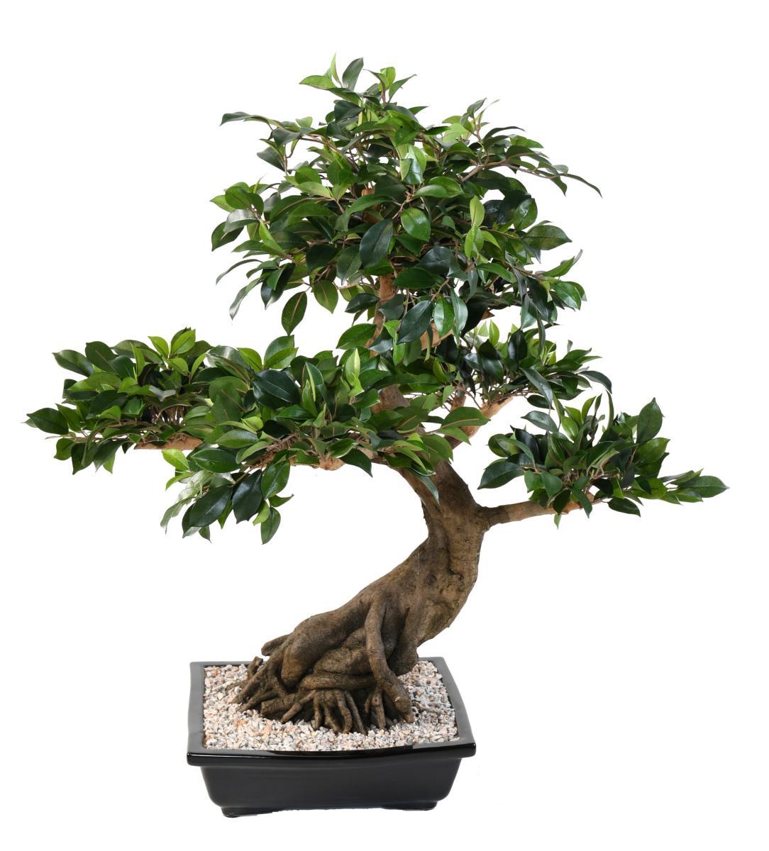 Bonsaï artificiel arbre miniature Ficus en coupe - plante d ...