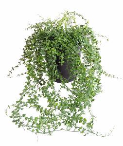Plante artificielle callisia en pot interieur exterieur for Plante grimpante artificielle exterieur