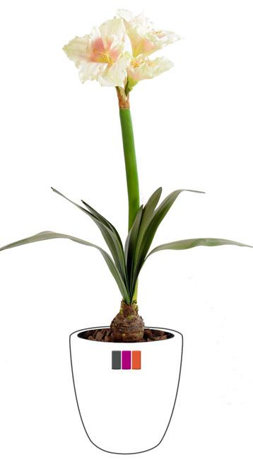 Fleur artificielle amaryllis bulbe plante d 39 int rieur cm cr me for Plante 90 cm