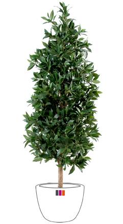 Plante artificielle laurier pyramide luxe haut de gamme for Arbres artificiels haut de gamme