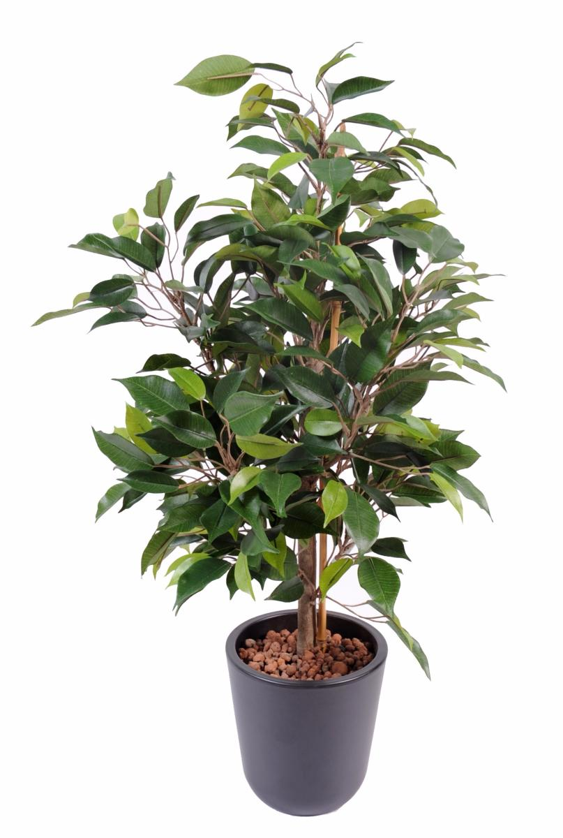 Arbuste artificiel ficus natasja plante synth tique for Arbuste interieur