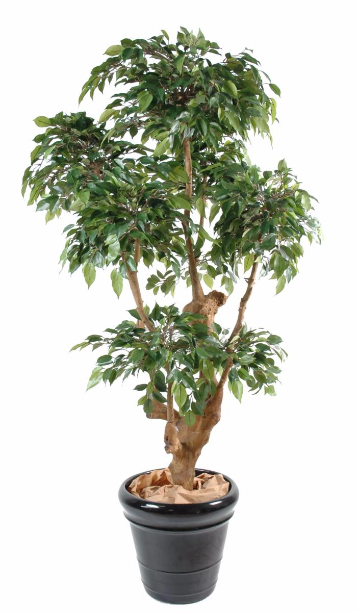 Arbre artificiel ficus natasja 5 t tes plante for Arbres artificiels interieur