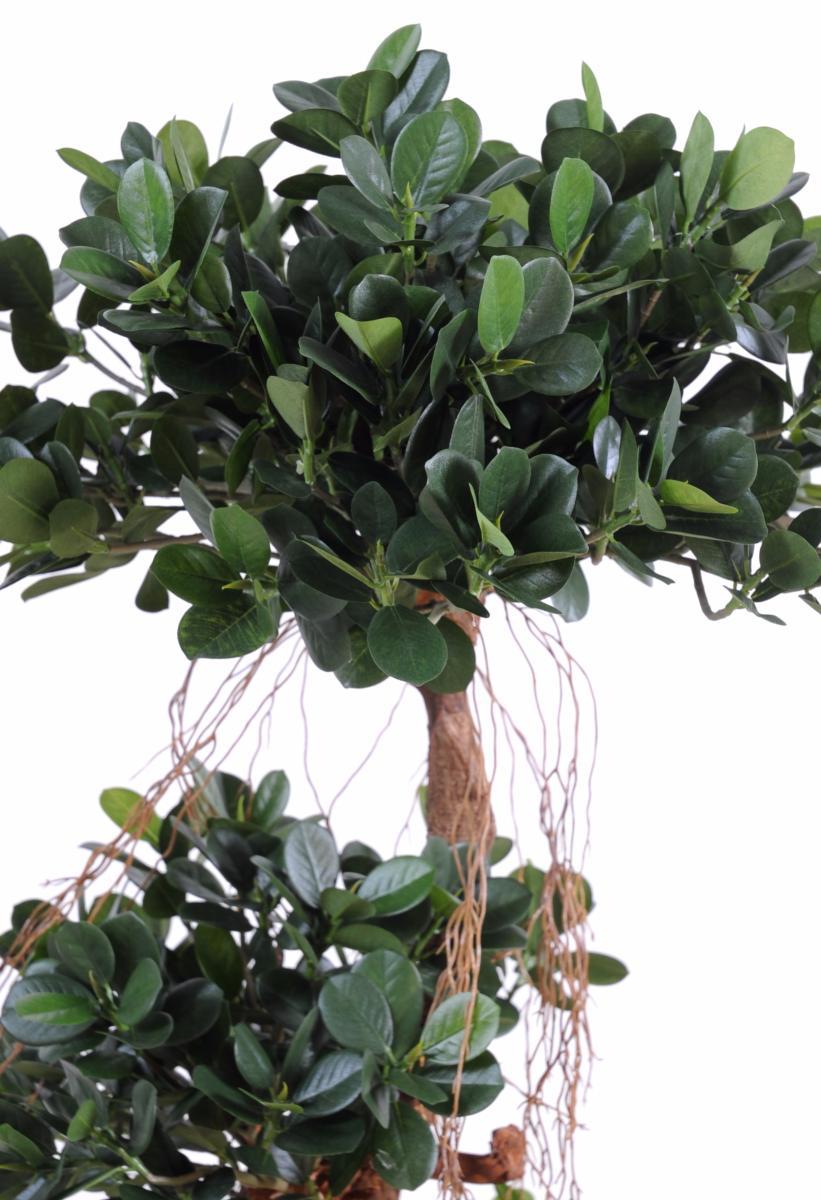 Arbre artificiel ficus panda microcarpa plante int rieur for Ficus plante interieur