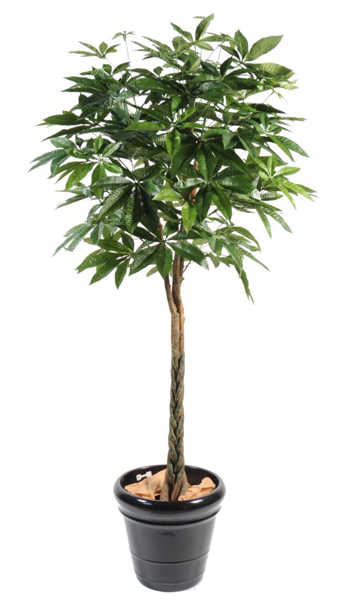 plante artificielle pachira tress arbre pour int rieur cm. Black Bedroom Furniture Sets. Home Design Ideas