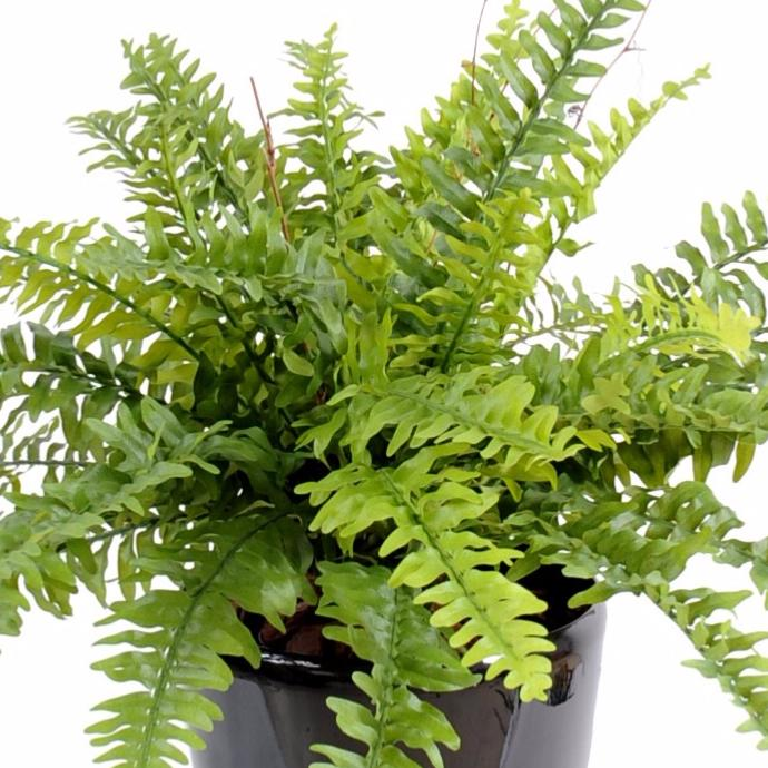 Plante verte artificielle artificielflower for Pot plantes interieur