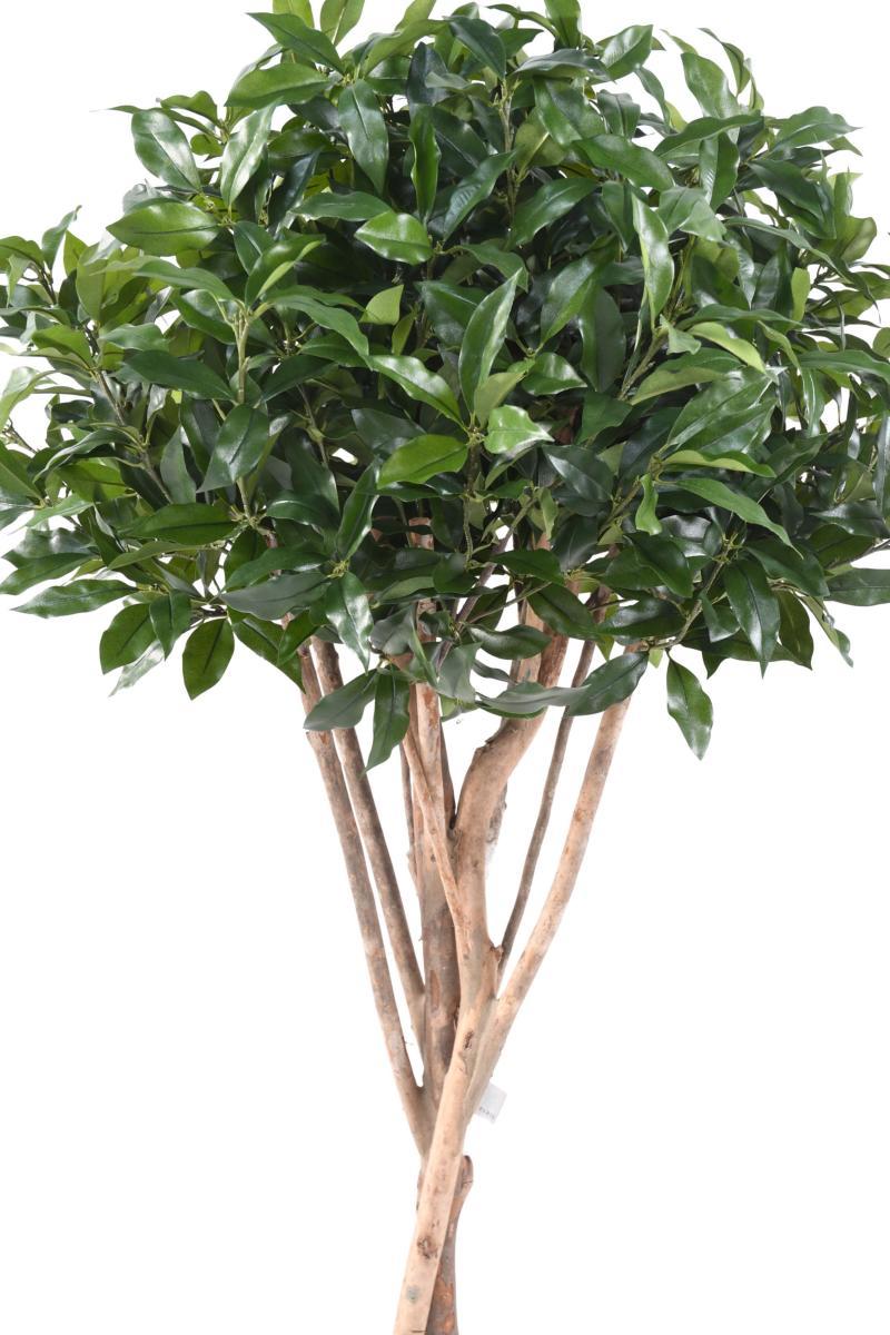 plante artificielle laurier lusitanica plante d 39 int rieur cm vert. Black Bedroom Furniture Sets. Home Design Ideas
