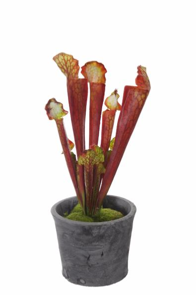 plante artificielle carnivore sarracenia en pot int rieur cm rouge. Black Bedroom Furniture Sets. Home Design Ideas