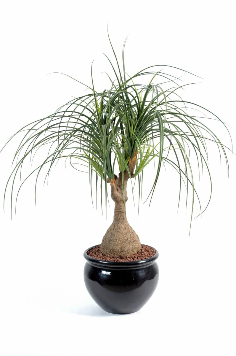 Plante artificielle beaucarnea pied d 39 l phant int rieur for Plante interieur