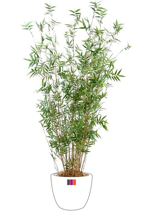 bambou artificiel oriental 11 cannes fines plante d 39 int rieur cm. Black Bedroom Furniture Sets. Home Design Ideas