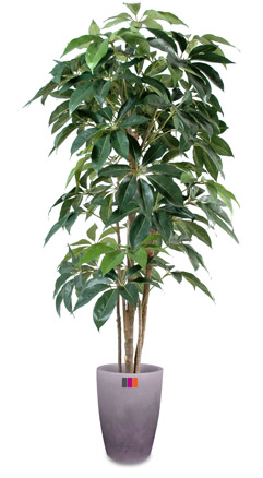 Plante artificielle tropicale schefflera amata 150cm for Plante tropicale exterieur