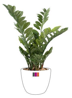 Plante artificielle zamioculcas d coration d 39 int rieur for Zamioculcas exterieur