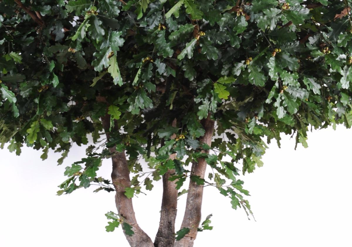 arbre artificiel forestier ch ne plante d interieur h 350 cm feuillage vert. Black Bedroom Furniture Sets. Home Design Ideas