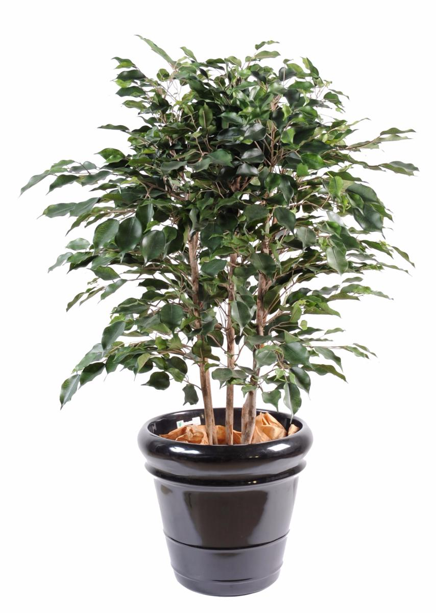 Arbuste artificiel ficus exotica buisson plante d for Arbuste artificiel