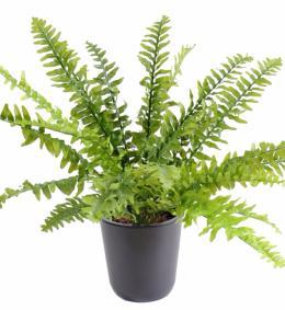 Plante artificielle asparagus plastique int rieur for Fougere d interieur plante