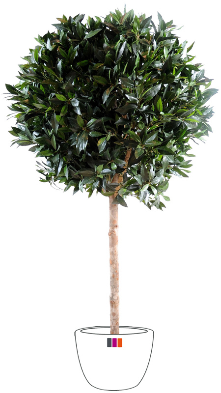 Plante artificielle laurier boule luxe jardin fran ais cm for Plante 90 cm