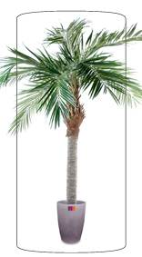 Palmier artificiel Majesty - arbre tropical luxe - H.250 cm vert